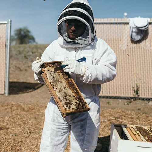 Person holding a bee hive in protective suit