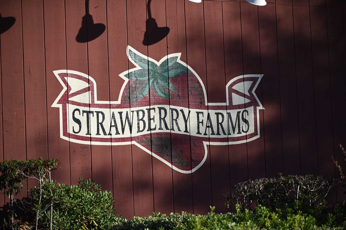 Strawberry Farms painting on the wall